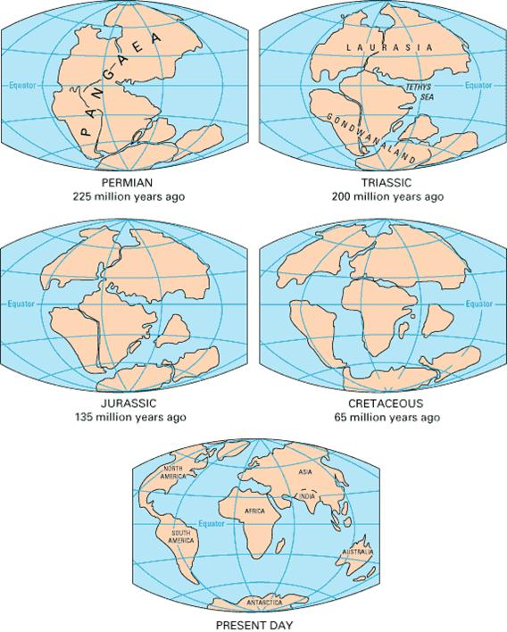 Arrangement of the continents during the last five geological periods.