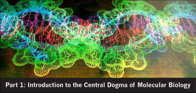 Born to Science: Intro to Central Dogma of Molecular Biology