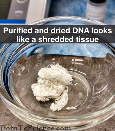 Picture of Isolated, Dried DNA