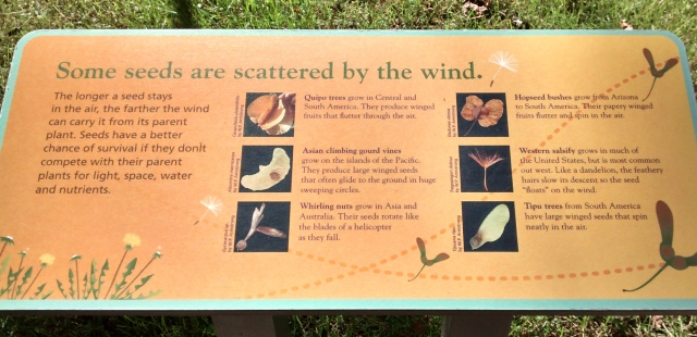 Seeds and Air Currents, Museum of Life + Science, Durham North Carolina, BorntoScience