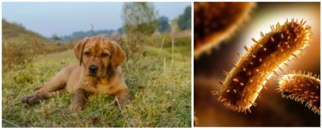 Dogs and Rabies, 8 Cuddly Creatures and the Dark, Deadly Diseases They Carry