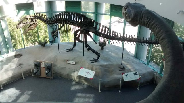 North Carolina Museum of Natural Sciences - Acrocanthosaurus