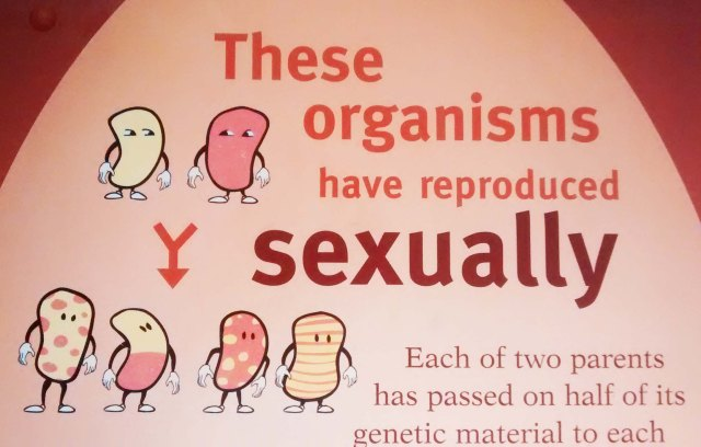 Evolution of sexual reproduction at the Field Museum